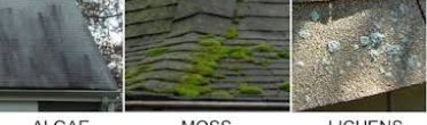 DEPTFORD ROOF CLEANING